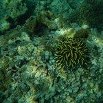 Corals at Loh Samah Bay