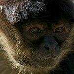 Foto de Tulum Monkey Sanctuary