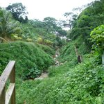 Ziplining thruough the jungle