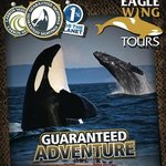 ‪Eagle Wing Whale Watching Tours‬