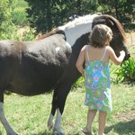 my autisic granddaughter loved patting the horses