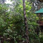 Standard Tree House