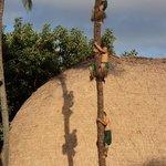 amazing tree climbers