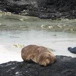 Baby sea lion at the beach near Cerro Brujo