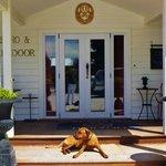 front door with dog !