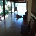Tommy relaxing on the verandah
