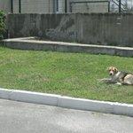 Cute dogs near Reactor # 4