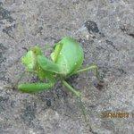 grasshopper in Sekinoo Fall
