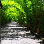 the bamboo entrance