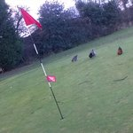"""The 6th Green was """"Foul""""... tee hee hee,,,"""