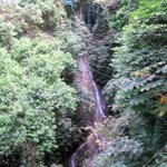 WATER FALLS IN THE RAIN FOREST