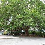 Рингштрассе - улица парков и скверов