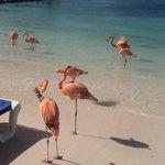 flamingo island!