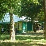kiwis - bungalows toilés