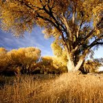 Peavine Trail by Matt White
