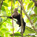 Up Close & Personal With Wild Monkeys In The National Park