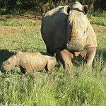 Mum and 3 week old baby rhino. .. Feb 2014