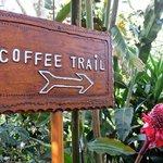 Coffee trail.