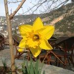 Ανοιξιάτικο λουλούδι ...
