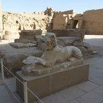 Lwy w świątyni