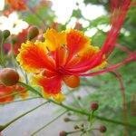botanical gardens eilat 10