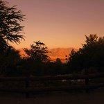 botanical gardens eilat 5