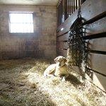 A sunny spot in the barn