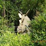 Parc dinosorus