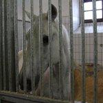 Stallion in stall