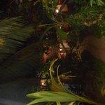 Garden/Grounds of Pinto Guest House, Candolim, Goa