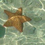 Nadando con estrellas de mar
