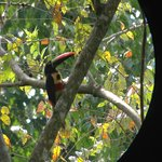 Toucan in the Park