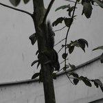 Chipmunk, Kandy Down Town Hostel