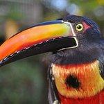 Hotel wildlife - looks like a toucan