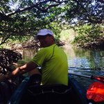 in the mangroves