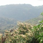 Flowering treetops from tower on Youth Challenge Trail