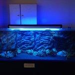 Cray fish tank