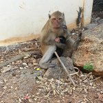 Mother and child monkeys at Khao Takiap