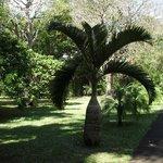 SSR Botanical Gardens