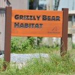 Grizzly Bears ahead.
