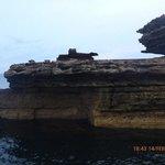 WW2 era torpedo tubes facing across the entrance to the Bay