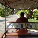 Tuktuk driver on hotel grounds