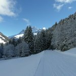 Ski-ing into treelines in Les Crosets