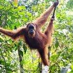 Sumatranorangutans Jungleadventure - Private Day Tours