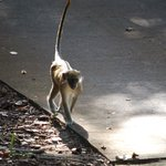 Monkey on the move