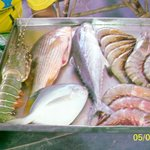 FISH AT CAPTAINS CABIN