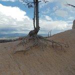 Un albero che sa cosa vuol dire resistere...