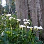 Botanical Gardens (Jardin Botanico