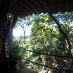 Howler Hangout view