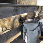 Farm area for kids